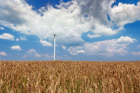 viento: Generadores de viento turbinas en campo de trigo en Rumania