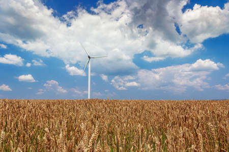 Wind generators turbines on wheat field in Romania
