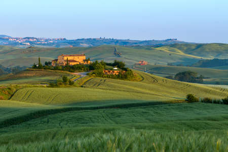 the tuscany: Landscape in Tuscany at sunset in summer