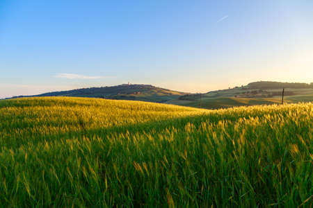 san quirico d'orcia: Landscape in Tuscany at sunset in summer