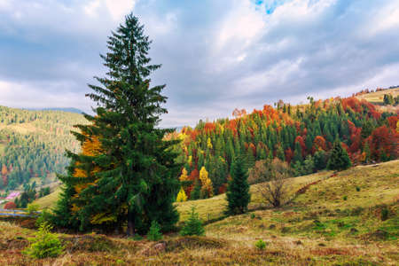 Colorful autumn landscape in the Carpathian mountains. Transylvania,Romania. Europe. Stock Photo