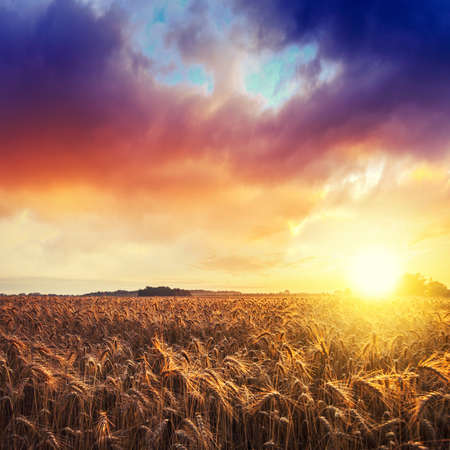 ration: Magic sunrise with wheat field in summer Hungary ( ration 3:3 ) Stock Photo