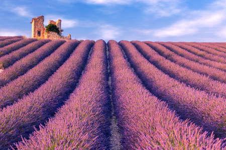 alpes: Lavender field summer landscape near Valensole.Provence.France Stock Photo