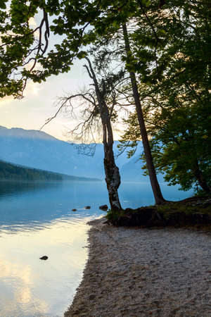 bohinj: Sunset on the lake Bohinj in Triglav national park, located in the Bohinj Valley of the Julian Alps.