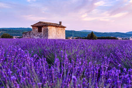 Lavender field summer sunset landscape near Sault, Provence - France Stock Photo