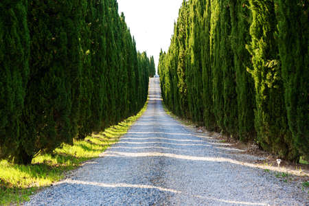 tuscany: Road with cypresses near Volterra, Tuscany-Italy Stock Photo