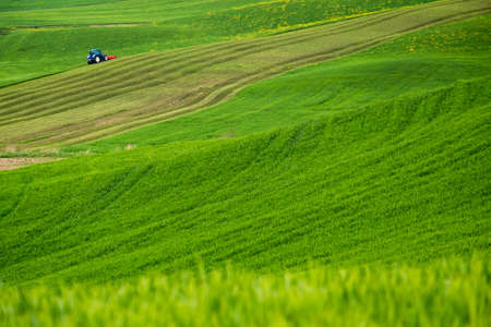 Minimalistic landscape with green fields in the in Tuscany-Italy Stock Photo