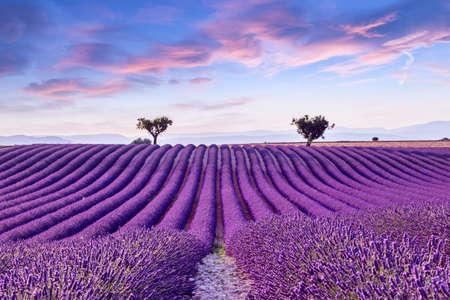 Champ de lavande coucher de soleil d'été paysage près de Valensole.Provence, France Banque d'images