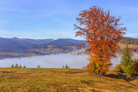 Colorful autumn tree in the Carpathian mountains. Transylvania,Romania. Europe.