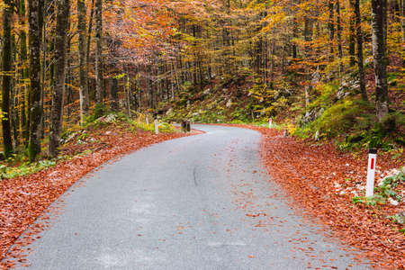 bohinj: Road in the autumnal forest in Slovenia  Stock Photo