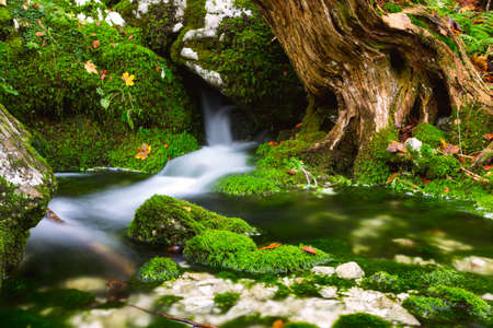 View of a beautiful autumn creek near Bohinj.Slovenia Stock Photo
