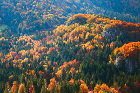 bohinj: The mountain autumn landscape with colorful forest in Slovenia Stock Photo