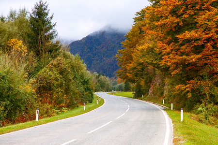 bohinj: Road in the colorful autumnal mountains in Slovenia