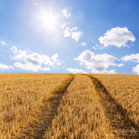 Big yellow field after harvesting and beautiful  sky and clouds at summer sunny day