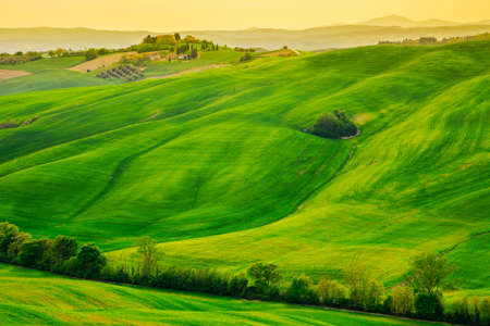 Waves hills, rolling hills, minimalistic landscape with green fields in the Tuscany. Italy