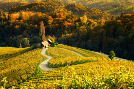 Famous Heart shaped wine road in autumn, view from Spicnik near Maribor in Slovenia. Foto de archivo - 133551902