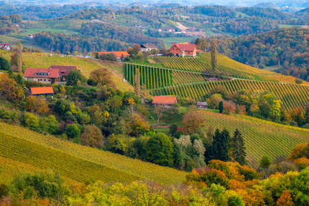 Vineyards in autumn in Slovenia close to the border with Austria south styria. Foto de archivo - 133552306