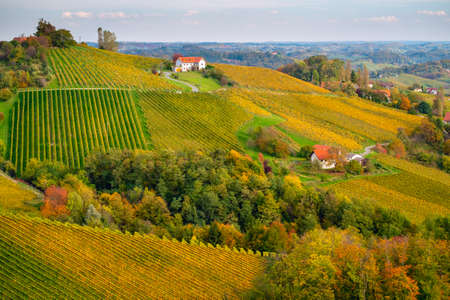 Vineyards in autumn in Slovenia close to the border with Austria south styria. Foto de archivo - 133552308