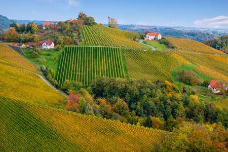 Vineyards in autumn in Slovenia close to the border with Austria south styria. Foto de archivo - 133552336