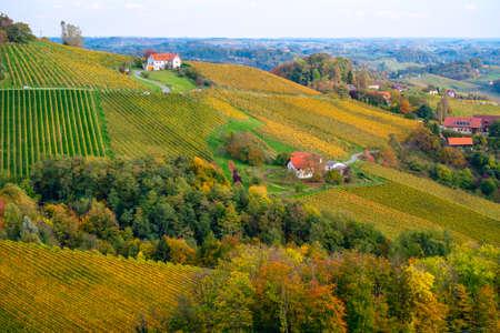 Vineyards in autumn in Slovenia close to the border with Austria south styria. Foto de archivo - 133552339