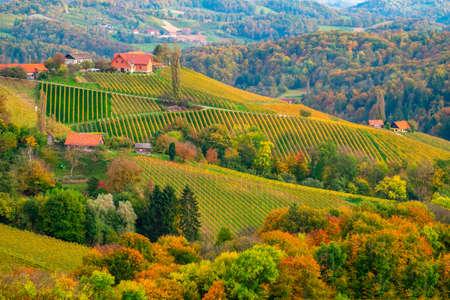 Vineyards in autumn in Slovenia close to the border with Austria south styria. Foto de archivo - 133552342
