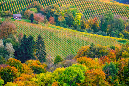 Vineyards in autumn in Slovenia close to the border with Austria south styria. Foto de archivo - 133552358