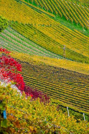 Vineyards in autumn in Slovenia close to the border with Austria south styria. Foto de archivo - 133552374
