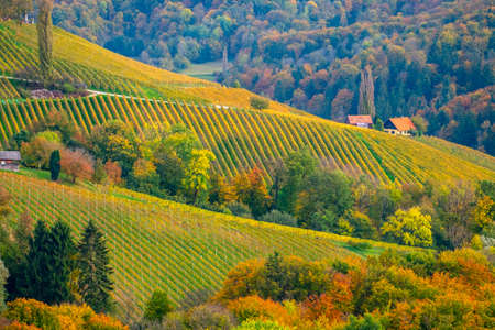 Vineyards in autumn in Slovenia close to the border with Austria south styria. Foto de archivo - 133552375