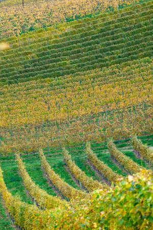 colors of vineyard in autumn in Slovenia close to the border with Austria south Foto de archivo - 133552399