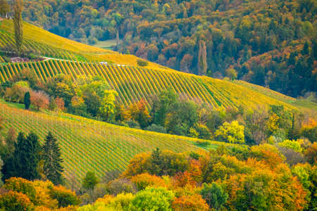 Vineyards in autumn in Slovenia close to the border with Austria south styria. Foto de archivo - 133552417