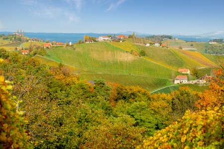 Vineyards in autumn in Slovenia close to the border with Austria south styria. Foto de archivo - 133552490