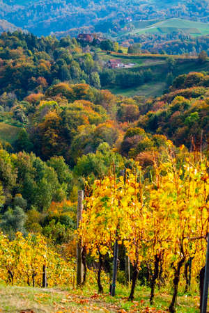 Colors of vineyard in autumn in Slovenia close to the border with Austria south Foto de archivo - 133552492