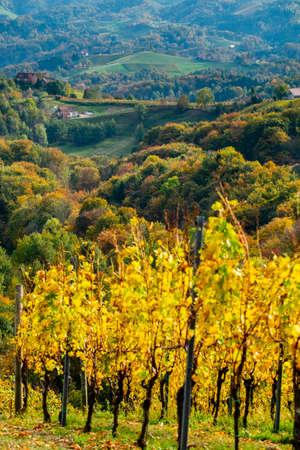 Colors of vineyard in autumn in Slovenia close to the border with Austria south Foto de archivo - 133552495