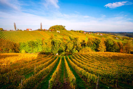 Vineyards in autumn in Slovenia close to the border with Austria south styria. Foto de archivo - 133552502
