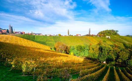 Vineyards in autumn in Slovenia close to the border with Austria south styria. Foto de archivo - 133552503