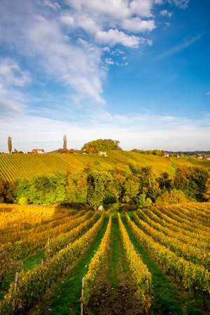 Vineyards in autumn in Slovenia close to the border with Austria south styria. Foto de archivo - 133552505