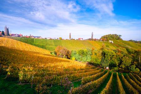 Vineyards in autumn in Slovenia close to the border with Austria south styria. Foto de archivo - 133552507