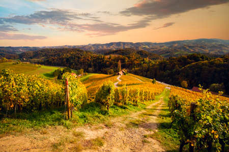 Famous Heart shaped wine road in autumn, view from Spicnik near Maribor in Slovenia. Foto de archivo - 133552506