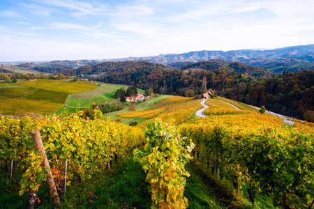Famous Heart shaped wine road in autumn, view from Spicnik near Maribor in Slovenia. Foto de archivo - 133552520