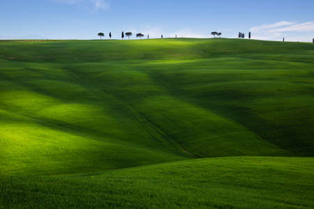 Green hillside field with long shadows in Tuscany, Italy Standard-Bild