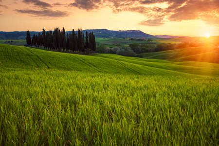 Rolling fields of Tuscany at sunset in summer in Italy Standard-Bild