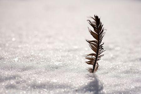 bird crow feather on a background of white snow photo