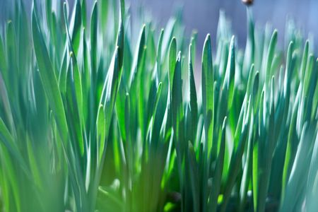 young green of spring grass, background bokeh photo