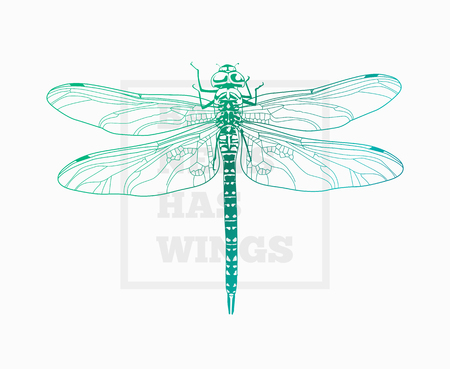 insect dragonfly. Vector art. Çizim