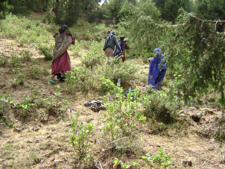Re-greening of Ethiopian highlands Stock Photo