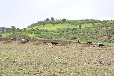 Farming in Ethiopia Stock Photo