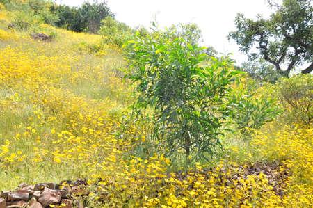 Yellow and green Ethiopia Stock Photo