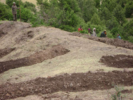 alluvial: Land and Forest Rehabilitation