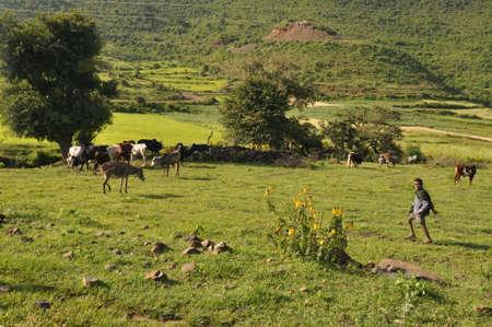 sedentary: Rural landscape