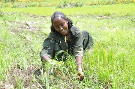A female farmer of north Ethiopia taking care of her crop